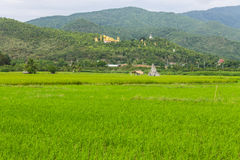 Thai field and Golden Buddha big statue at Wat Mokkanlan Stock Photos