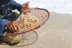 A thai fisherman is searching for shells Stock Photo