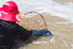 A thai fisherman is searching for shells (Pharella javanica) Stock Photography