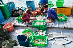 Thai fishermen sorting day capture in Thailand Royalty Free Stock Photography