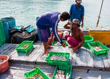 Thai fishermen sorting day capture in Thailand Stock Image