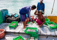Thai fishermen sorting day capture in Thailand Stock Photo