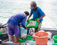 Thai fishermen sorting day capture in Thailand Royalty Free Stock Image