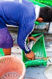 Thai fishermen sorting day capture in Thailand Stock Images