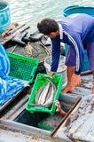 Thai fishermen sorting day capture in Thailand Royalty Free Stock Images