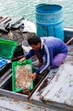 Thai fishermen sorting day capture in Thailand Stock Photos