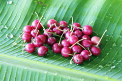 Thai flacourtia fruit Royalty Free Stock Photos
