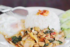 Thai food, kapao moo. Kapao moo is one of menu Thai food Stock Image