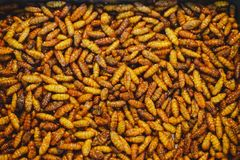 Fried insects royalty free stock images