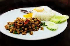 Thai Food Rice Topped with Stir-Fried Pork and Basil with Fried Egg in White Dish Royalty Free Stock Images