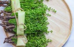 Thai Food Siamese neem tree Royalty Free Stock Image