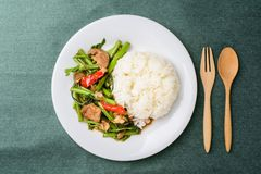 Thai food, stir fried morning glory Pad Pak Boong. With cooked rice on dish. Top view of food royalty free stock photography