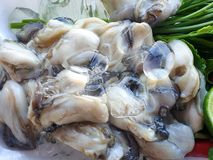 Thai food style, Fresh Oysters with vegetables acacia, lemon sliced as a background. Ready for eat or serving stock image