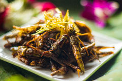 Thai Food. In thailand ,thai culture royalty free stock photography