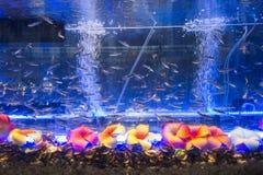 Foot massage aquarium Stock Images