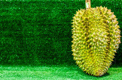 Thai Fruits : Durian, the Controversial King of Tropical Fruits. Durian fruit, King of fruits,  Southeast Asia as the king of fruits, Thai Fruits : Durian, the Stock Photography