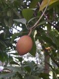 thai frukt Royaltyfri Fotografi