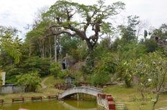 Thai garden. Garden in the thai village of Krabi Stock Photo