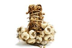Thai garlics. Thai garlic with white background Stock Image
