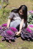 Thai Girl in purple cabbage farm Royalty Free Stock Photos
