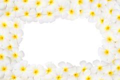 Plumeria flower frame isolated Stock Photos