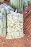 Thai Green Eggplant Stock Photo