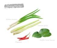 Thai herbs. Green onions, peppers, lemon grass, herbs kaffir lime leaves, vegetable stock illustration