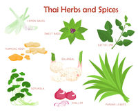 Thai herbs and spices seasoning  illustration Stock Image