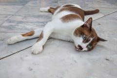 Thai homeless cat sleep on the floor Stock Photography