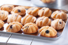 Thai homemade small cake with raisin royalty free stock image
