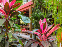 Thai house in a tropical garden Stock Photography