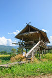 Thai hut style. On rice field Stock Images