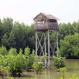 Thai huts style in mangrove forest Royalty Free Stock Photos