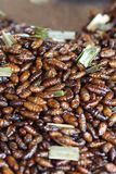 Thai Insect food Stock Image