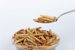 Thai Insects, Fried insects mealworms for snack. Stock Photography