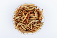 Thai Insects, Fried insects mealworms for snack. Stock Image