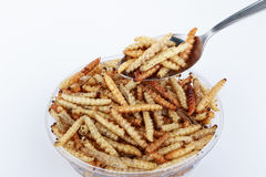 Thai Insects, Fried insects mealworms for snack. Stock Photo