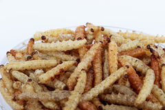 Thai Insects, Fried insects mealworms for snack. Royalty Free Stock Photography
