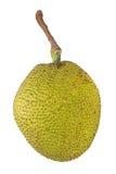 Thai Jack fruit Royalty Free Stock Image