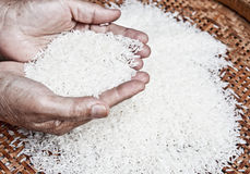 Thai jasmine rice Royalty Free Stock Images