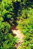 Thai Jungle Stock Image