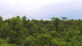 Thai jungle trees, aerial fly by video. Thai jungle trees, aerial video clip stock video footage