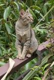 Thai katt arkivfoto