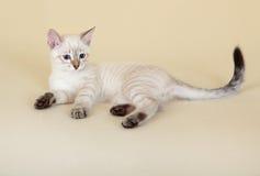 thai kattunge Royaltyfri Bild