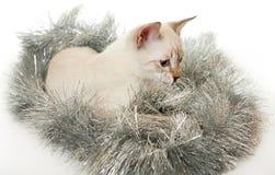 Thai kitten in Christmas tinsel. Stock Photos