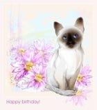 Thai kitten and gerberas Stock Image