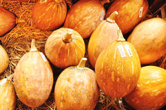 Thai Laithong Squash or Thai pumpkin on Straw Royalty Free Stock Image