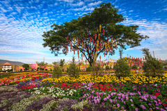 Thai lantern on a tree in colorful flower garden Royalty Free Stock Image