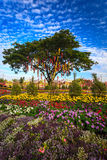 Thai lantern on a tree in colorful flower garden Royalty Free Stock Photos