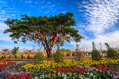 Thai lantern on a tree in colorful flower garden Stock Images